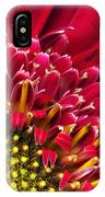 Bright Red Gerbera Daisy IPhone Case