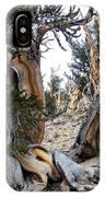 Bristlecone Forest, Ca November 2105 IPhone Case