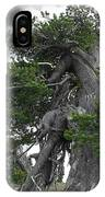 Bristlecone Pine Tree On The Rim Of Crater Lake - Oregon IPhone Case