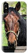 Brown Horse In A Corral IPhone Case