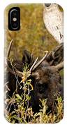 Bull Moose In Hiding IPhone Case