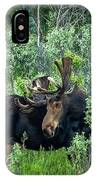 Bull Moose In The Bushes IPhone Case