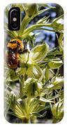 Bumblebee On Elkweed Blossoms IPhone Case