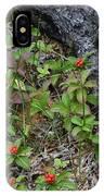 Bunchberry Berries IPhone Case