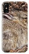 Bunny Siesta IPhone Case