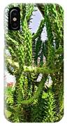 Cactus At Pilgrim Place In Claremont-california  IPhone Case