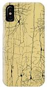 Cajal Drawing Of Microscopic Structure Of The Brain 1904 IPhone Case