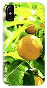 California Bright Orange Fruit Tree In Downtown Sacramento In Ca IPhone Case
