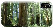 California Redwood Forest Trees Art Prints IPhone Case
