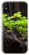 California Redwoods 4 IPhone Case