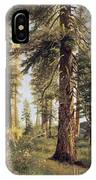 California Redwoods IPhone Case