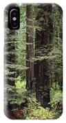 California Redwoods IPhone Case