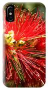 Callistemon IPhone Case