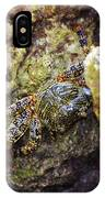 Camouflaged Crab IPhone Case