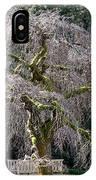 Camperdown Elm Tree IPhone Case