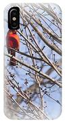 Cardinal I IPhone Case