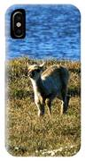 Caribou Fawn IPhone Case