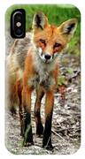 Cautious But Curious Red Fox Portrait IPhone Case
