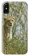 Cheetah Cub In Grass IPhone Case