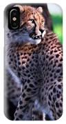 Cheetah Cub IPhone Case