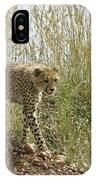 Cheetah Exploration IPhone Case