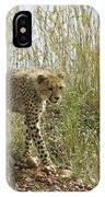 Cheetah Exploration IPhone Case