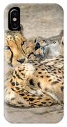 Cheetah Lounge Cats IPhone Case