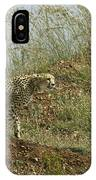Cheetah On The Prowl IPhone Case