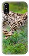 Cheetahs Acinonyx Jubatus Hunting IPhone Case