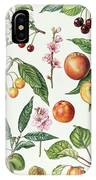 Cherries And Other Fruit-bearing Trees  IPhone Case