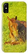 Chess Nut Horse IPhone Case