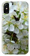 Chickasaw Plum Blooms IPhone Case