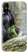 Chimpanzee Foraging IPhone Case