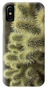 Cholla Cactus IPhone Case