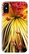 Chrysanthemum Morning IPhone Case