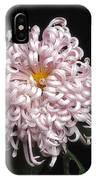 Chrysanthenmum 'satin Ribbon' IPhone Case