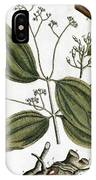 Cinnamon Tree, 1735 IPhone Case