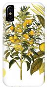 Citron And Orange, 1613 IPhone Case