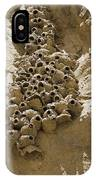 Cliff Swallow Hirundo Pyrrhonota Nests IPhone Case