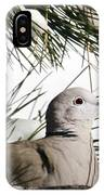 Close Up African Collared Dove IPhone Case