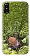 Close-up Palm Leaves IPhone Case