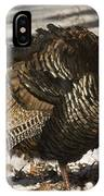 Closeup Of An Adult Male Wild Turkey IPhone Case