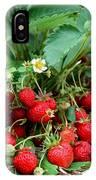 Closeup Of Fresh Organic Strawberries Growing On The Vine IPhone Case