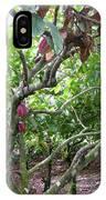 Cocoa Tree With Ripe Cocoa Pods IPhone Case