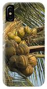 Coconuts Cluster At Los Tules Resort IPhone Case
