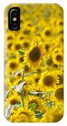 Colby Farms Sunflower Field Newbury Ma IPhone Case