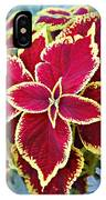 Coleus And Dusty Miller IPhone Case
