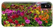 Colorful Dahlias In Garden IPhone Case