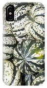 Colorful Winter Acorn Squash On Display IPhone Case