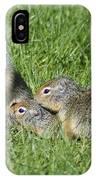 Columbian Ground Squirrels IPhone Case
